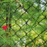 Je tuin opfleuren doe je met de wisteria!